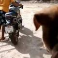 【子イヌ】 お父さんがバイクで出かけようとする。パパ行かないでぇ~! → 子犬はこうなる…