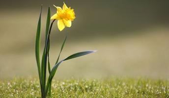 最近思い出したある花の話