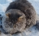 う、動けニャイ…-35度の極寒の地で足が凍って道路に貼りついた猫、無事救出される
