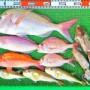 タイラバでロクマル真鯛!ティップランでアオリイカも!