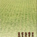『実る稲穂』の画像