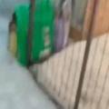 子ネコを託児所に迎えに行った。ここだよ、ここだよぉ~! → 子猫はこうなる…