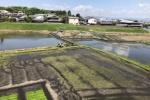 交野市内で田植えがそろそろ始まろうとしてる!〜今年も6月1週目から本格的に動き出す雰囲気〜