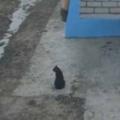 ネコが散歩から帰ってきた。いつものお願いしますにゃ♪ → 帰宅方法はこんな感じ…