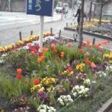 『戸田公園駅前に春の薫り』の画像