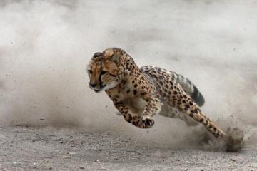 「動物がトップスピードで100mを走った場合のタイム」 ランキング!