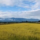 『稲刈り風景(2019.10.15)』の画像