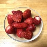 『イチゴいただきました!』の画像