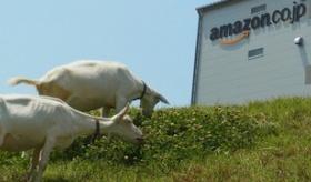 【企業】   日本の amazonでは 除草に ヤギを使ってるらしいぞ。   海外の反応