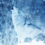 『絶滅したと言われているニホンオオカミは生存しているかもしれない』の画像