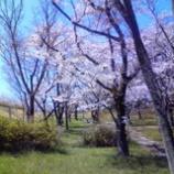 『狭山湖のさくらも』の画像