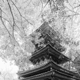 仏教徒ワイが京都の寺院鎮守社で打線組んだ