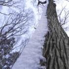 『大木に海老のしっぽ』の画像