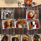 『2013-10-14のわんちゃん達』の画像