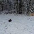 犬とカワウソをつれて散歩していた。雪と川だぁ♪ → カワウソさんはこうなります…