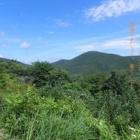 『暑中、お見舞い申し上げます。 広島県民の森』の画像