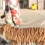 【動画】中国、街中を「トラ」を連れて散歩…!? 実は犬をトラ模様にカラーリング!