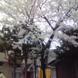 『東北の春』の画像
