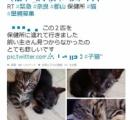 中川翔子「猫を保健所に連れて行くなっ」激怒して一般人をTwitterで晒しアカウント削除に追い込み炎上