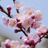 『春を待って』の画像