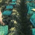【農業分野の外国人技能実習生】1~3月2000人予定 人手不足を懸念 入国停止で農相