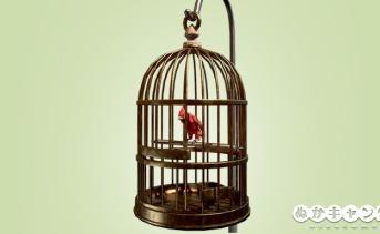 カーディナルの鳥籠