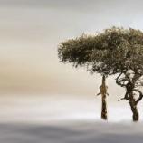 『キリンの絶滅の予兆:マサイキリンを絶滅危惧種に指定』の画像