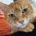 猫の限界のサイン 20211018