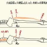 『筋肉においてのテコの原理を知る。その①(最終回)』の画像