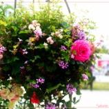 『花フェスタ2013札幌』の画像