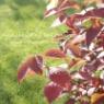 【ガーデニング】木漏れ日が紅葉をキラキラキラ♪