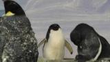 このペンギン怖すぎワロタ・・・