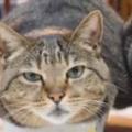 2匹のネコが並んで箱に入っていた。1匹が向きを変える → 仲良しはこうなります…