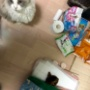 高齢猫の介護生活を初めてしてみて
