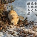 『ひなたぼっこ』の画像