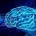 人間の脳 初めてインターネットに接続wwww