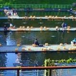 『さかな釣り』の画像