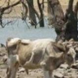 『大洪水と大干ばつの陰で犠牲になる動物たち』の画像