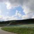キャベツ畑と愛妻の丘
