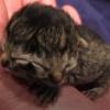 「2つの顔」を持って生まれた子猫、愛情を沢山注がれながら3日後に息を引き取る