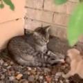 ネコが庭の隅でくつろいでいた。そこにトコトコ子犬がやってくる。どうなるの? → こうなります…