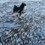 ノルウェーにてあまりの寒さで一瞬にして海が凍り、魚と鹿が逃げ遅れて氷漬けに