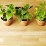 『なにこの非日常感…ライティングした観葉植物がキレイ 【インテリアまとめ・インテリアショップ リグナ 】』の画像