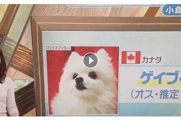 海外「日本のTVに出てたなんて」歌える犬ゲイブの日本デビューを祝福する海外