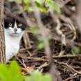 アメリカ「ネズミ駆除するために野良猫1000匹を街に放ったわw」