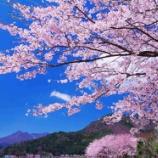 『春といえば桜!と実はもう一つ・・・。皆様、ご存知でしょうか?』の画像