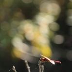 蜻蛉の手帳