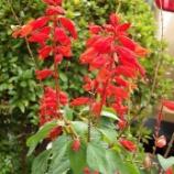『11月の花と紅葉①』の画像