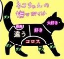 お前らが猫を完全に間違った方法で撫でている理由:そしてそれを正しく行う方法