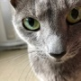 猫のフィラリア症対策をしていますか?
